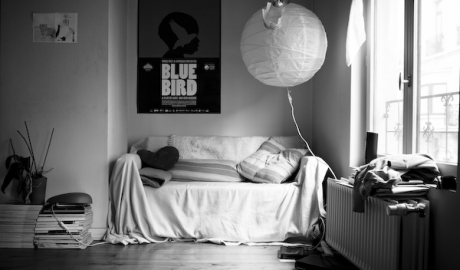 bluebird1